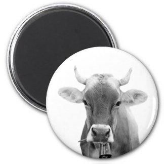 Cow farm animal portrait photo black and white magnet