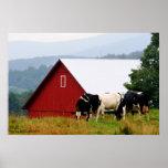 Cow Farm Landscape Print
