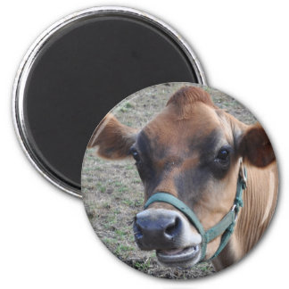 cow head 6 cm round magnet