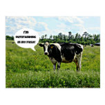 Cow Humour Post Cards