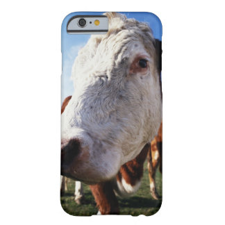 Cow in field, close-up barely there iPhone 6 case