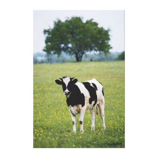 Cow in field of Wildflowers Gallery Wrapped Canvas