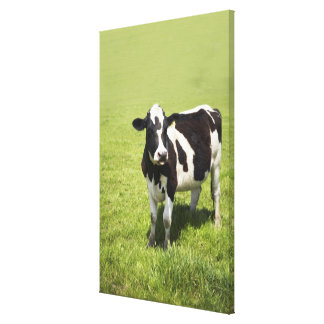 Cow in meadow canvas print