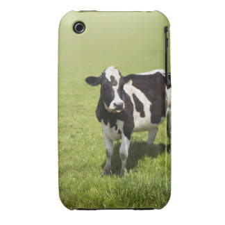 Cow in meadow iPhone 3 covers