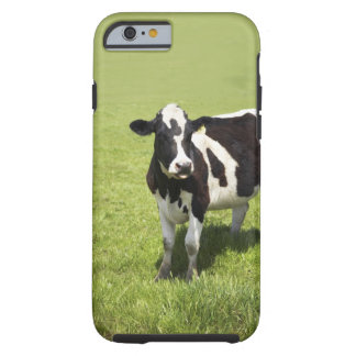 Cow in meadow iPhone 6 case