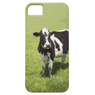 Cow in meadow iPhone 5 case