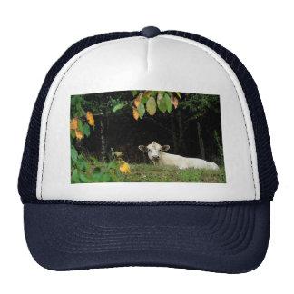 Cow in Pasture Trucker Hats