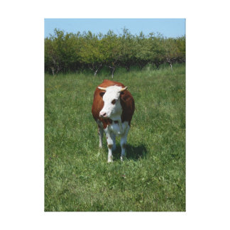 Cow In The Pasture Canvas Print