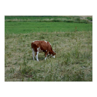 Cow In The Pasture Poster