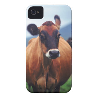 cow iPhone 4 Case-Mate cases