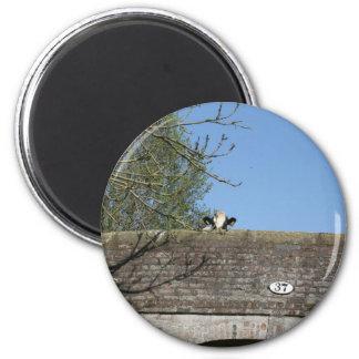 Cow Looking over Bridge Llangollen Canal Magnet