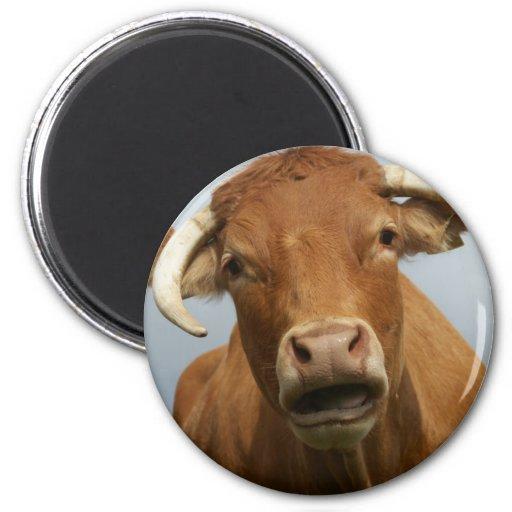 Cow Refrigerator Magnet
