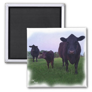 COW MAGNET !