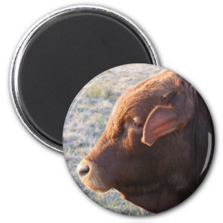 Cow magnet: The Bull 6 Cm Round Magnet