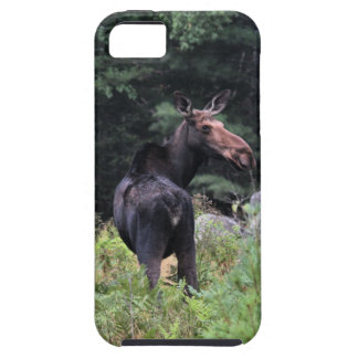 Cow Moose iPhone 5 Cover
