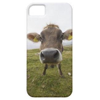 Cow near Tre Cime Di Lavaredo in Misurina, Barely There iPhone 5 Case