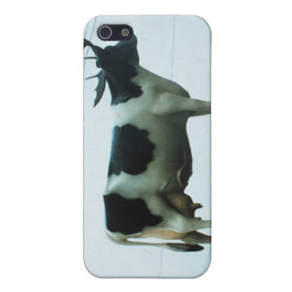 Cow on a Telephone Pole Cover For iPhone 5