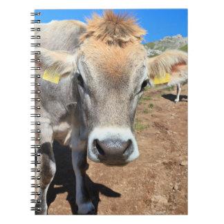 cow on alpine pasture spiral notebook