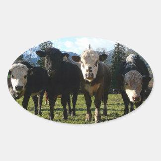Cow Posse Oval Sticker