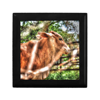 COW RURAL QUEENSLAND AUSTRALIA ART EFFECTS GIFT BOX