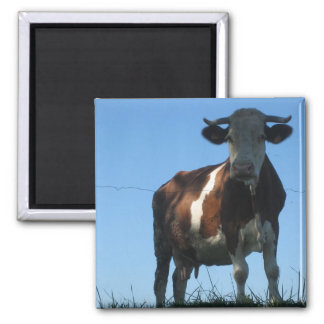 Cow Square Magnet