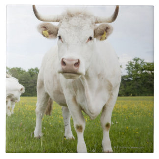 Cow standing in grassy field tile