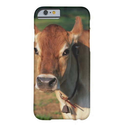 Cow Wearing a Cowbell iPhone 6 Case
