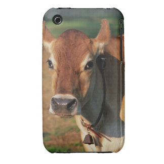 Cow Wearing a Cowbell iPhone 3 Covers