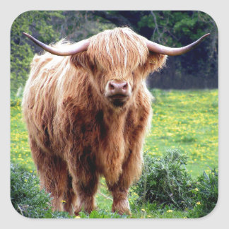 Cow with big horns beautiful nature scenery square sticker