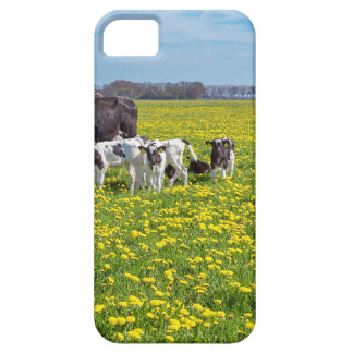 Cow with calves grazing in meadow with dandelions iPhone 5 cover