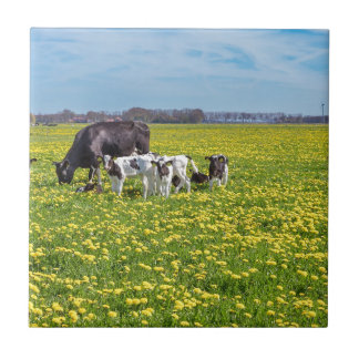 Cow with calves grazing in meadow with dandelions tile