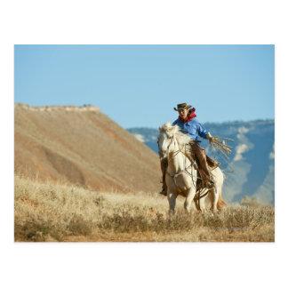 Cowboy 13 postcard