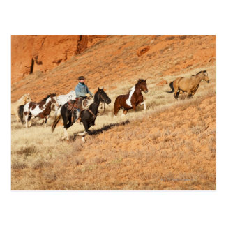 Cowboy herding horses postcard