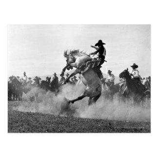 Cowboy on a bucking bronco postcard
