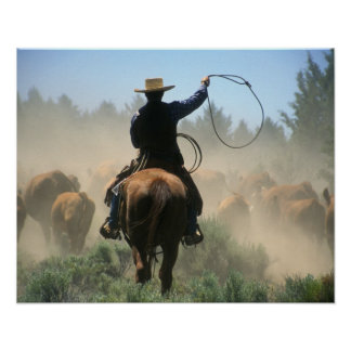 Cowboy on horse with lasso driving cattle poster