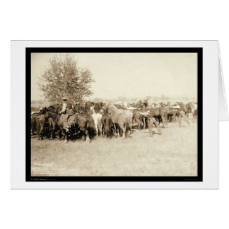 Cowboys Roping a Herd of Horses SD 1887 Card
