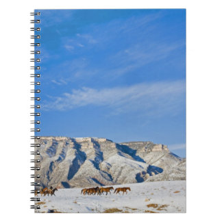 Cowboys with Heard of Horses Spiral Notebooks