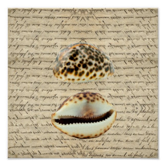 Cowrie shells poster