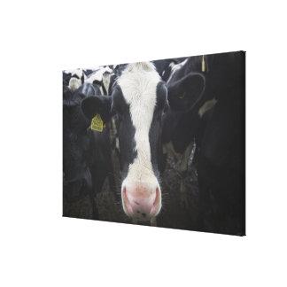 Cows 3 canvas print