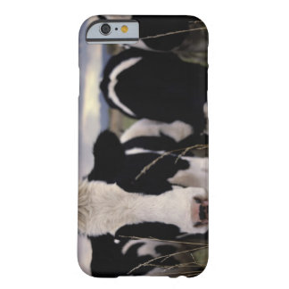 Cows 3 iPhone 6 case
