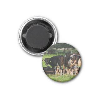 Cows 3 Cm Round Magnet