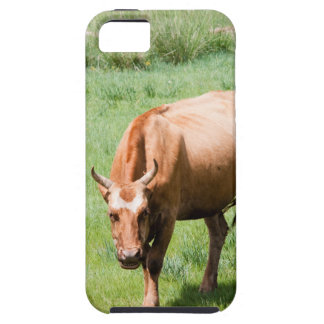 cows and bulls iPhone 5 covers