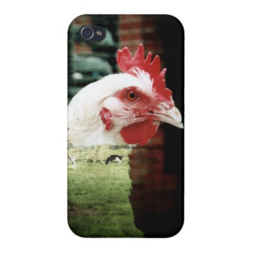 Cows and chicken case iPhone 4 cover