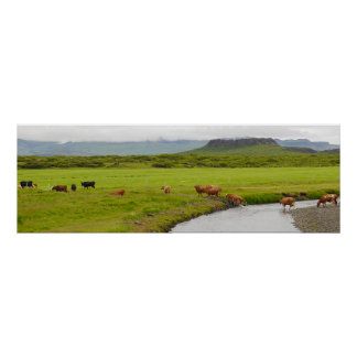 Cows and Eldborg Crater Iceland Poster