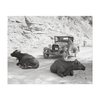 Cows Blocking Road 1940 Stretched Canvas Print