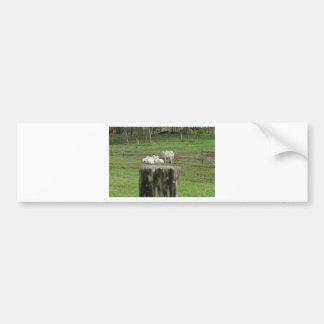 COWS BRAHMAN & FENCE POST RURAL AUSTRALIA BUMPER STICKER