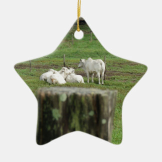 COWS BRAHMAN & FENCE POST RURAL AUSTRALIA CERAMIC STAR DECORATION