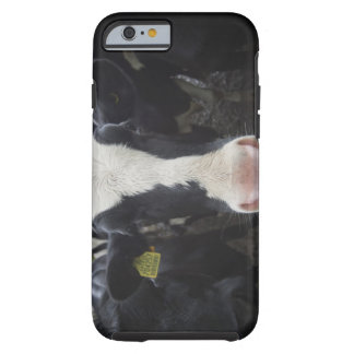 Cows iPhone 6 Case