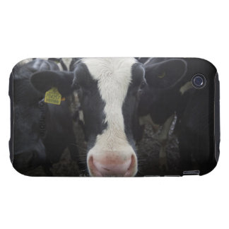 Cows iPhone 3 Tough Covers