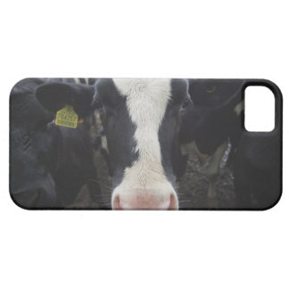 Cows Case For The iPhone 5